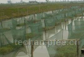 湖北仙桃黄鳝养殖繁育试验场